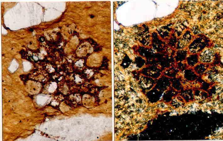 diaplectic quartz sandstone