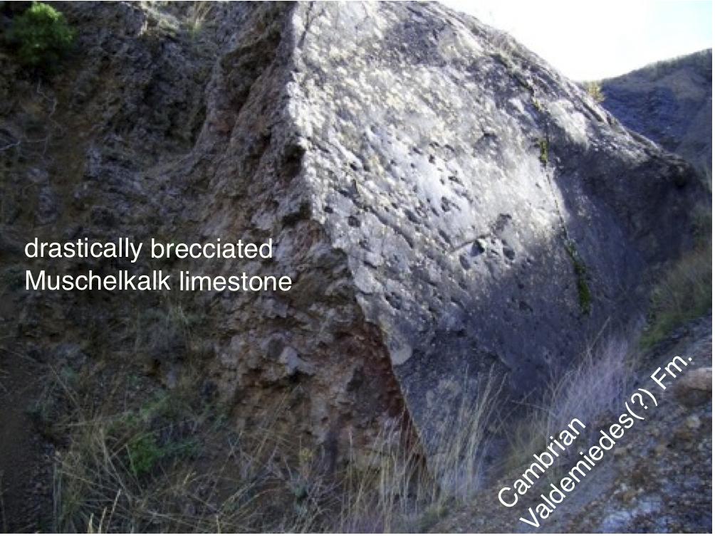 Schlifffläche Kambrium Valdemiedes-Fm. über Muschelkalk