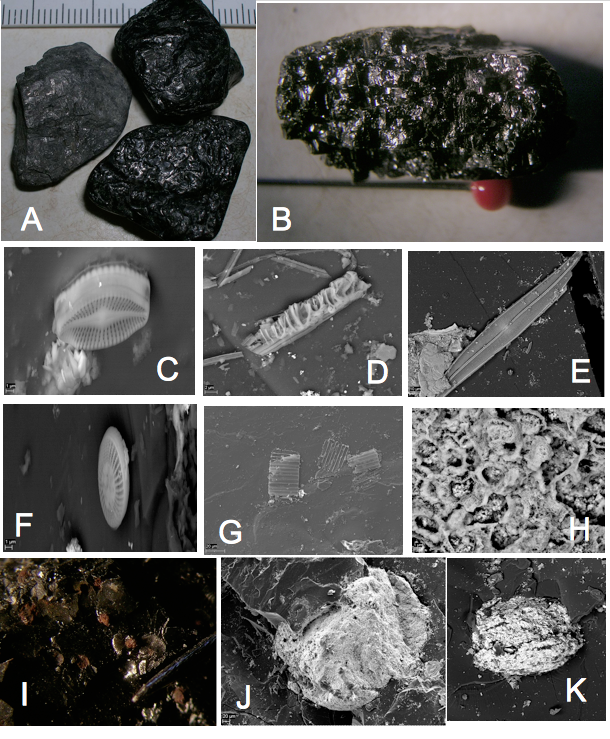 Chiemgau-Impakt - schock-metamorphes organisches Material